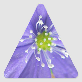 Center of a blue flower with white stamps triangle sticker