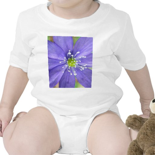 Center of a blue flower with white stamps baby creeper