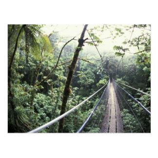 Central America, Costa Rica, Monteverde Cloud Postcard