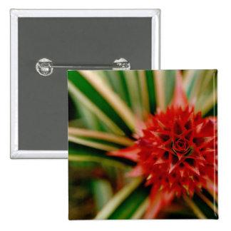 Central America, Costa Rica, San Vito, Wilson 15 Cm Square Badge