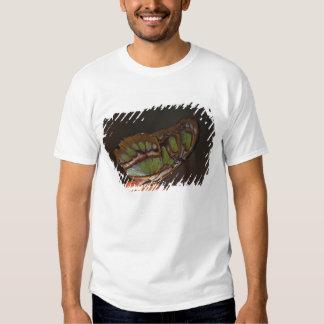 Central America, Costa Rica, Selva Verde. 2 T Shirt