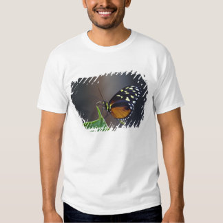 Central America, Costa Rica, Selva Verde. 3 Shirt