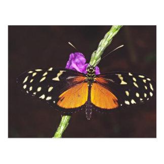 Central America, Costa Rica, Selva Verde. Postcard