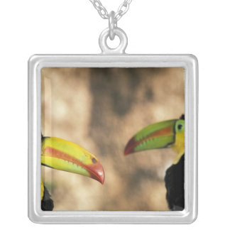 Central America, Honduras. Keel-billed Toucan 2 Square Pendant Necklace