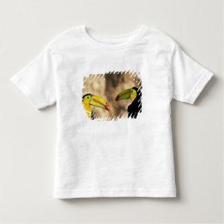 Central America, Honduras. Keel-billed Toucan 2 Tee Shirts