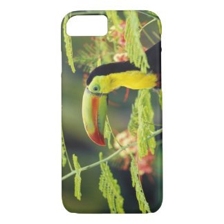 Central America, Honduras. Keel-billed Toucan iPhone 7 Case