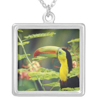 Central America, Honduras. Keel-billed Toucan Square Pendant Necklace