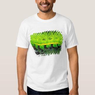 Central America, Panama, Barro Colorado Island. 2 T Shirts