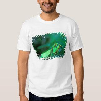 Central America, Panama, Barro Colorado Island. T-shirt