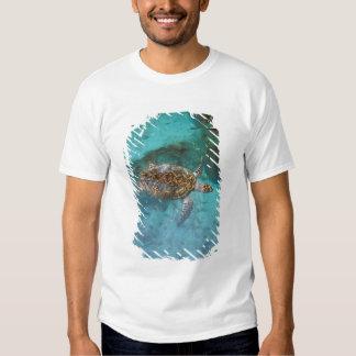 Central America, Panama, Bocas Del Torro Island. T-shirts