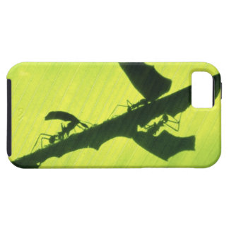 CENTRAL AMERICA, Panama, Borro Colorado iPhone 5 Cover