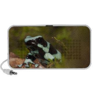 Central PA, USA, Auratus Dart Frog; aka Green Notebook Speaker