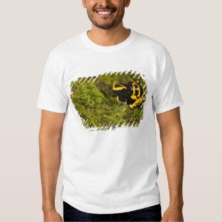 Central PA, USA, Bumble Bee Dart Frog; T-shirts