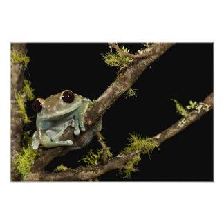 Central PA, USA, Maroon Eye Frog Moon Frog); Art Photo