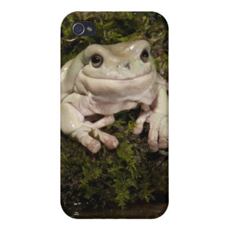 Central PA, USA, White's Treefrog; Litoria iPhone 4/4S Cover