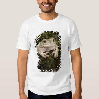 Central PA, USA, White's Treefrog; Litoria Shirts