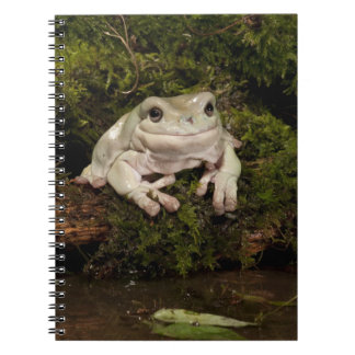 Central PA, USA, White's Treefrog; Litoria Spiral Note Book