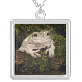 Central PA, USA, White's Treefrog; Litoria Square Pendant Necklace