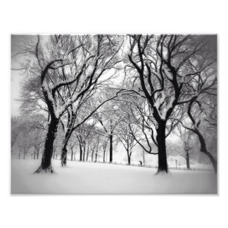 Central Park Blanketed In White Photo Print