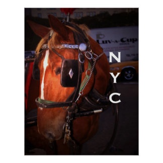 Central Park Carriage Horse Poster
