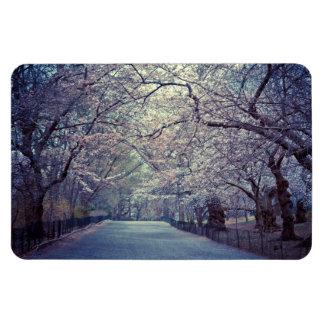 Central Park Cherry Blossom Path Rectangular Photo Magnet