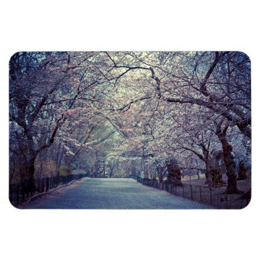Central Park Cherry Blossom Path Rectangular Magnets