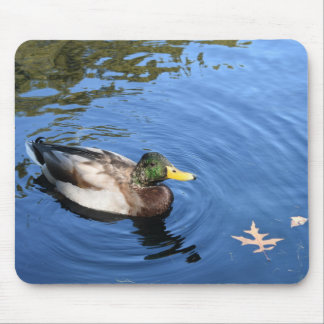Central Park NYC Conservatory Water Mallard Duck Mouse Pad