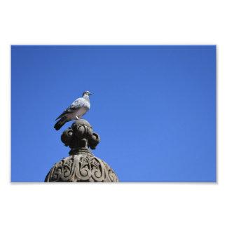 Central Park Pigeon Blue Sky New York City Bird Photo Print