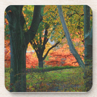 Central Park: Trees wearing their autumn finest 02 Coasters