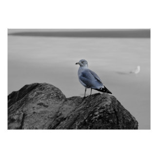 Central Park Wildlife Photo of a Gull on a Rock Posters