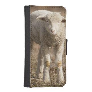 Central Pennsylvania, USA,Domestic sheep, Ovis iPhone SE/5/5s Wallet Case