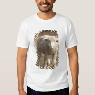 Central Pennsylvania, USA,Domestic sheep, Ovis Shirt