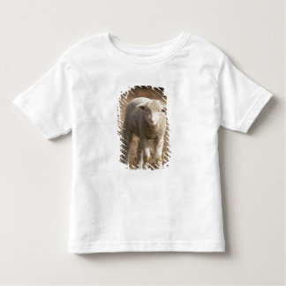 Central Pennsylvania, USA,Domestic sheep, Ovis Toddler T-Shirt