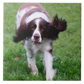 Ceramic tile with a photo of a spaniel running