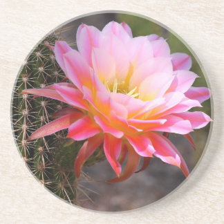 Cereus in pink coaster