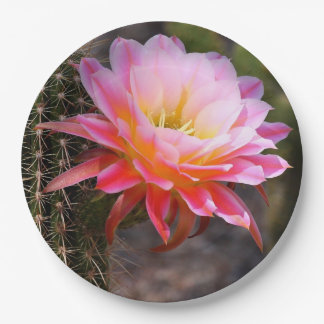 Cereus in pink paper plate