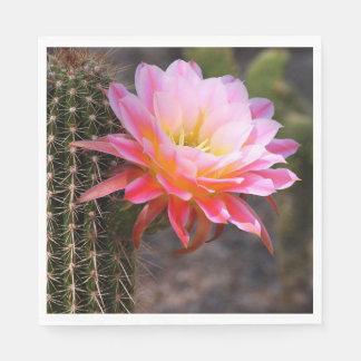 Cereus in pink paper serviettes