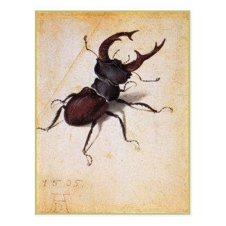 Cervus Lucanus by Albrecht Durer Postcard