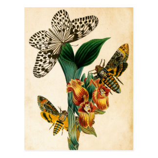 Ceylon Tree Nymph Butterfly & Acherontia Moths Postcard