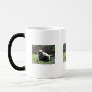 CGB Chubby Grizzly Bear Morphing Mug