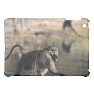 Chacma Baboons (Papio ursinus) walking through iPad Mini Cases