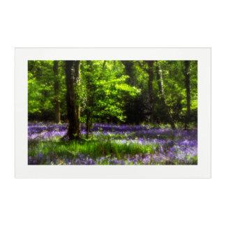 Chaddesley bluebells acrylic print