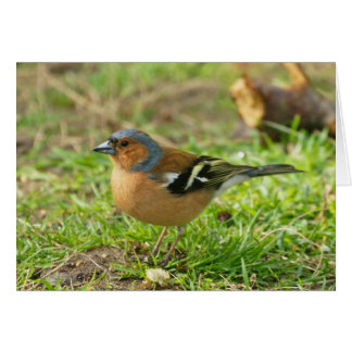 Chaffinch - Chaffinch Greeting Card Any Occasion -