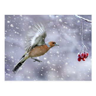 chaffinch christmas postcard, winter postcard