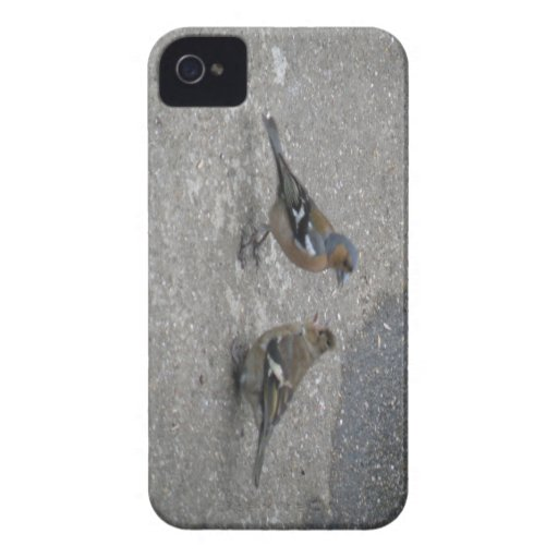 Chaffinch Feed Me Blackberry Bold Case