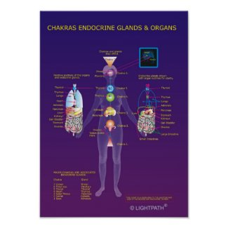 Chakras Endocrine Glands and Organs Poster