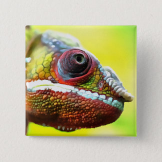 Chameleon Face 15 Cm Square Badge