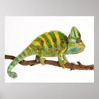 Chameleon Poster