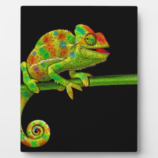 Chameleons Photo Plaques