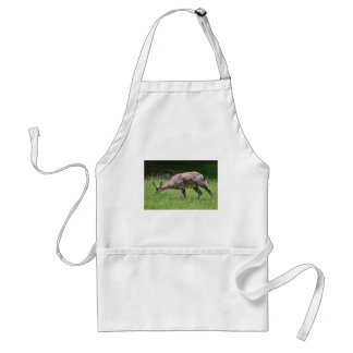 Chamois eating grass standard apron